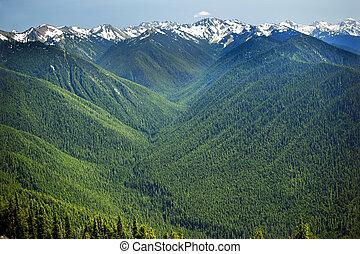 údolí, řádka, severozápad, washington, hory, pokojný, sněžit, olympijský, hurricaine, páteř, mladický udat, národnostní, věčně zelený, sad