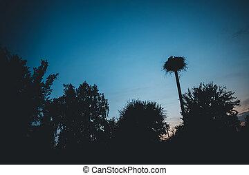 čáp, západ slunce, hnízdo, překrásný, silueta, vesnice