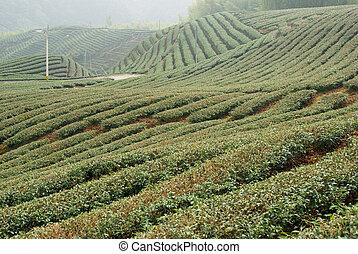 čaj, kopec, kopyto