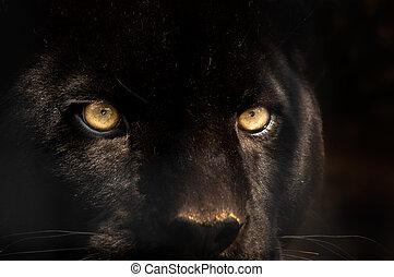 Černý panter