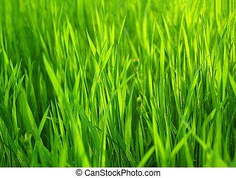 Čerstvá zelená tráva. Narozená tráva