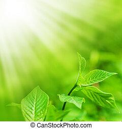 Čerstvé zelené listí a kopírovací lázně