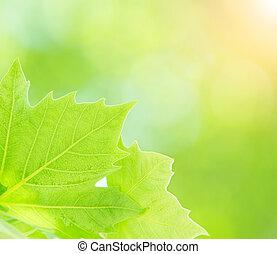 Čerstvé zelené listí