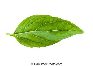 Čerstvý basilový list izolovaný