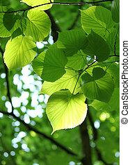 čerstvý, listoví, pramen