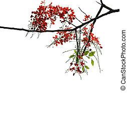 červeň, plný, běloba grafické pozadí, filiálka, osamocený, květiny, strom