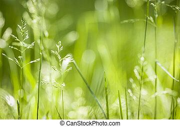 Červená tráva