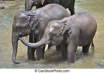 šikovný, dobytí, asie, koupel, slon, thajsko, řeka