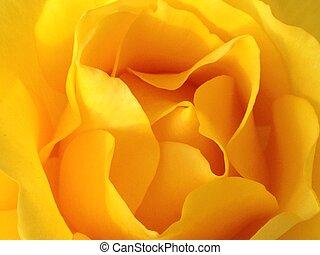 Žlutá květina