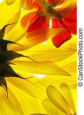 Žluté a červené letní květy.