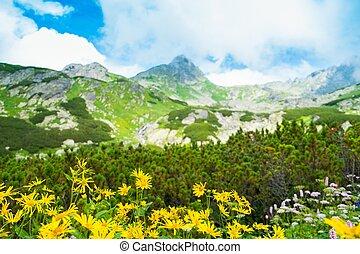 Žluté květiny proti krásnému horskému výhledu