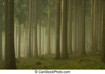 01, mlha, les