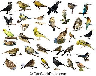 (35), neposkvrněný, ptáci, osamocený