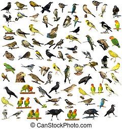 81, fotit, osamocený, ptáci