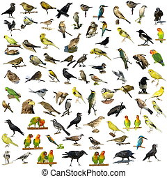 81 fotografií ptáků izolovaných