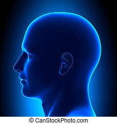 Anatomie hlavy - boční pohled - modrý podfuk