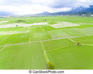 anténa, pramen, bojiště, taiwan, rýže, názor