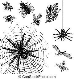 antický, hmyz, dát, (vector)