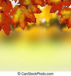 Autumní listy