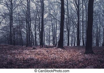 autumn kopyto, mlha, les, suchý, počasí