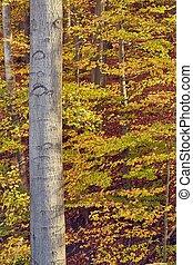 autumn les, barvy, detail