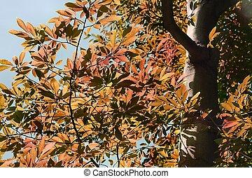 autumn les, detail
