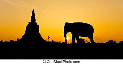 ayutthaya, pagoda, slon, thajsko