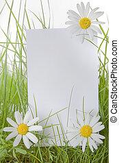 Bílá cedule mezi trávou a sedmi květinami