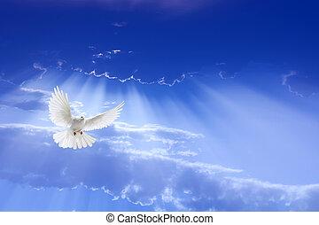 Bílá holubice letí na obloze