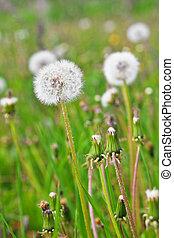 Bílá padělky mezi zelenými trávami