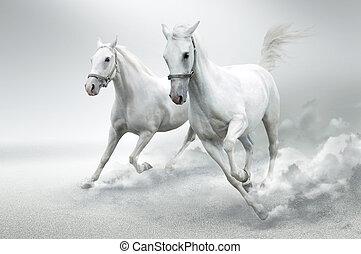 Bílé koně