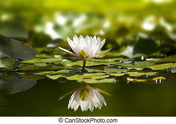 Bílé vodní jezírko v přírodě.