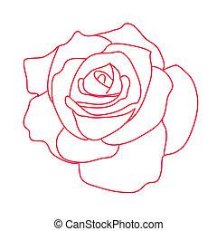 běloba grafické pozadí, růže, kreslení