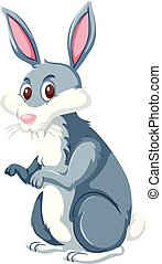 běloba králík, grafické pozadí