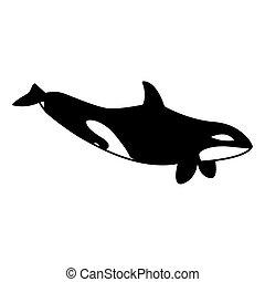 běloba velryba, zabiják, grafické pozadí