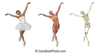 balet, overlays, -, anatomický