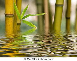 Bambusová voda