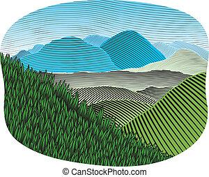 Barva lesních hor
