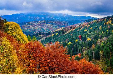 barvitý, mračný, autumn listoví, forrest, den, krajina, názor