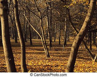 barvy, les, podzim