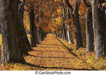 bavorsko, list, oak pěšina, podzim, německo