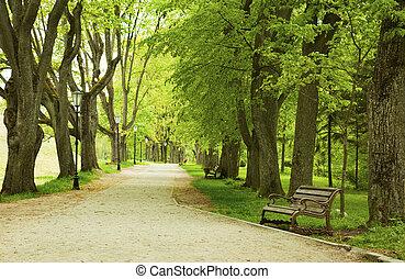 Bench v jarním parku