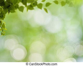 blbeček kráska, abstraktní, grafické pozadí, bokeh, listoví, bříza