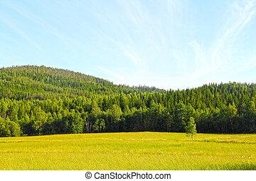 bojiště, krajina, hory