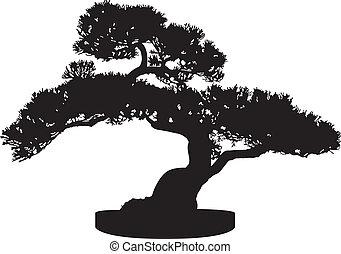 bonsai kopyto, silueta