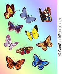 Bright motýl