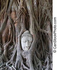 buddha, socha, ayutthaya, , strom, kořeny, thajsko