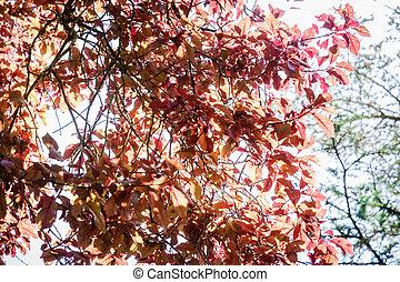 buk, podzim, strom, list, barvy