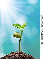 bylina, sluneční světlo