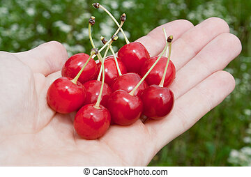 Cherry je v ruce
